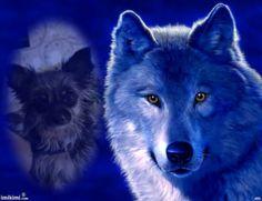 Blue wolf met noa