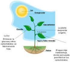 Resultado de imagen para plantas como seres vivos