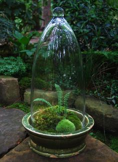 Mossarium - terrific website on growing mosses