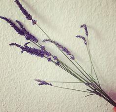 Lavande - fleurs - bouquet - jolie - belle - la mode - fashion - style - santé - nutrition - la vie est belle - blog - blogueuse - urbaine - vintage