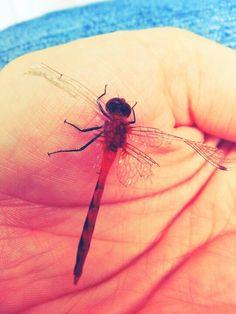 Hurt dragonfly