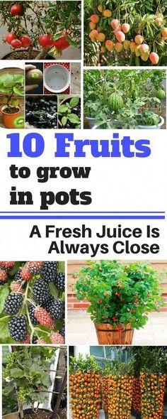 10 Fruits To Grow In Pots So That A Fresh Juice Is Always Close dicas para horta Growing Plants, Growing Vegetables, Garden Soil, Garden Plants, Fruit Garden, Garden Art, Fresco, Unique Garden, Gemüseanbau In Kübeln
