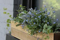 Gardenista Urban Gardening Erin Boyle Window Box (loving the  'forget me nots')