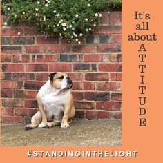 It's all about ATTITUDE. #standinginthelight Attitude