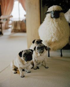 @Marianne Glass Burchard Design Doucett  ... thinking of you! ....valentino's pugs in gstaad