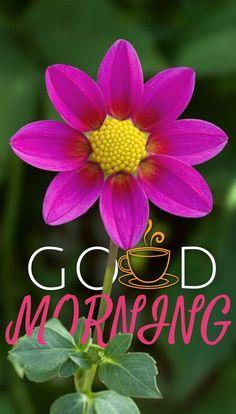 Good Morning Friday, Good Morning Texts, Good Morning Picture, Good Morning Messages, Good Morning Greetings, Good Morning Good Night, Morning Pictures, Morning Wish, Good Morning Images