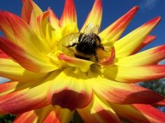 A bee on a flower near our Cornwall glamping abodes at Quality Unearthed