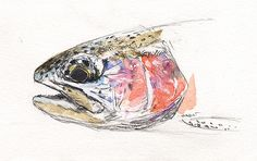 Drawing Flies 52 - Rainbow Trout by Jason Borger