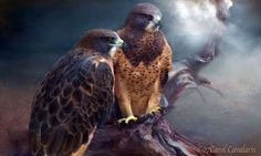 When a hawk appears Protector and visionary It is a messenger of the spirit Telling us to be aware Of our talents Of our blessings To open our eyes To see what is there to guide us.Prose by Carol Cavalaris © 07