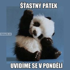 Funny Good Morning Memes to Kickstart Your Day Cute Good Morning Sunshine Meme IMages Happy Friday Quotes, Happy Memes, Happy Panda, Cute Panda, Baby Animals Pictures, Cute Baby Animals, Baby Pandas, Animal Babies, Animal Fun