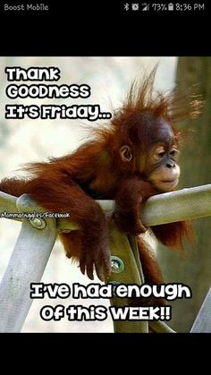 - Monkeys Funny - Friday More The post Friday appeared first on Gag Dad. Humor Friday …Friday - Monkeys Funny - Friday More The post Friday appeared first on Gag Dad. Good Morning Funny Pictures, Funny Good Morning Quotes, Good Morning Love, Good Morning Greetings, Friday Quotes Humor, Monday Quotes, Funny Friday Memes, Thursday Quotes, Happy Day Quotes