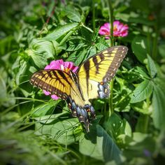 #beauty in all things. #depictthed #detroit_igers #detroitmycity #lovethed #butterfly #michigrammers #puremichigan #mittenaddiction #mittenstatelove #greatlakesstate #garden