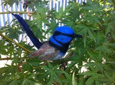 Blue Wren By Catherine Stein skittykitty.com Blue Jay, Felt Art, Wren, Kitty, Sculpture, Bird, Animals, Little Kitty, Animales