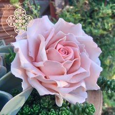 Pink sugar paste rose to compliment a romantic wedding cake Pink Sugar, Sugar Paste, Sugar Flowers, How To Make Cake, Cake Designs, Compliments, Wedding Cakes, Romantic, Rose