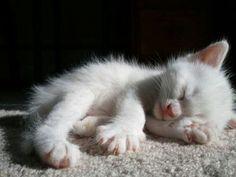 ADORABLE KITTY!