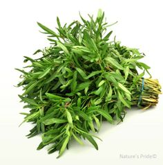 What is savory? Summer, winter and dried savory. Health benefits of savory herb. Winter Savory, Summer Savory, Savory Herb, Exotic Fruit, Spice Blends, Medicinal Plants, Pink Flowers, Herbalism, Spices