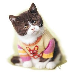 Cat Shirt - Snickers
