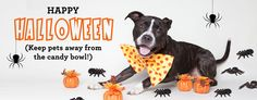 The Executive Director of Found Animals Foundation shares her top tips for helping pups get through the Halloween season.
