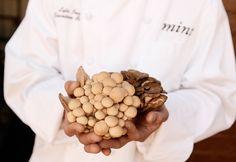 chef-holding-fresh-mushrooms
