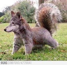 Squirreldog! I wish this was real.