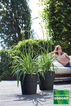 Macrame, Gardens, Plants, Outdoor Gardens, Plant, Garden, House Gardens, Planets