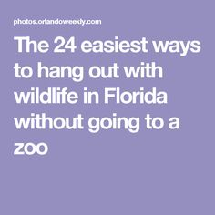 The 24 easiest ways to hang out with wildlife in Florida without going to a zoo