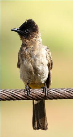 Keep Birds Out Of The Garden Pinterest Bird Gardens And Yards