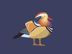 Picture: Mandarina Duck  #illustration #picture #birds #duck #pics daaashiky@gmail.com