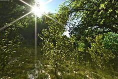 Terragen 4 - Virtual Landscapes