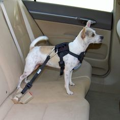 Minimize driving distractions and increase protection for both you and your dog with this dog harnesses.The complete harness system comes equipped with adjustable safety tether and is durable but lightweight and comfortable.