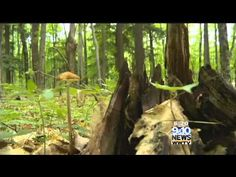 Hometown Tourist Hartwick Pines State Park - YouTube