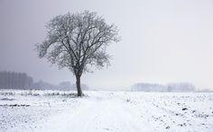 Tree Into The Snow