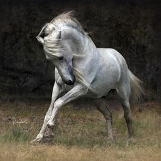 Gorgeous Stallion -By Woitek Kwiatkowski