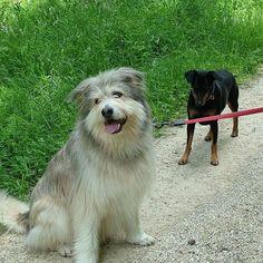 Dogs, Animals, Animales, Animaux, Pet Dogs, Animal, Animais