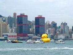 Florentijn Hofman: The rubber duck arrived in Victoria Harbour, Hong Kong today and will be on display untill the 9th of june! 02/05/13