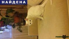 Найдена кошка домашняя, белая с янтарными глазами г.Тверь http://poiskzoo.ru/board/read31244.html  POISKZOO.RU/31244 .. октября на ул. Лукина найдена белая кошечка с красным ошейником. Неделю бегала по двору. Приучена к лотку и без проблем моется. Постоянно сидит на руках.   РЕПОСТ! @POISKZOO2 #POISKZOO.RU #Найдена #кошка #Найдена_кошка #НайденаКошка #Тверь