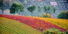 """Assisi a Frantoi Aperti: """"tracce di vita vera"""". - Viaggi dei MesupiViaggi dei Mesupi"""