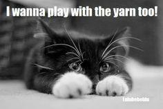Oh My Freaking Stars!: Kitties & Yarn   <3 from the Lulu