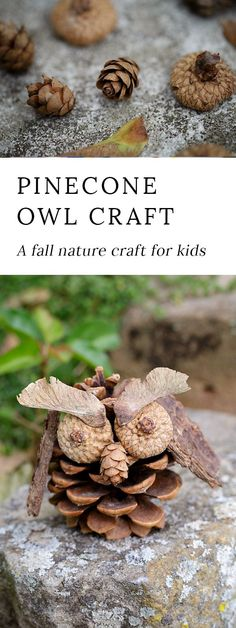 Fall is the perfect season for crafting! Kids will love being creative with acorns, pinecones, twigs, bark, and seeds to create one-of-a-kind Pinecone Owls. via @https://www.pinterest.com/fireflymudpie/