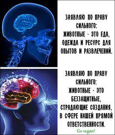 Как понять, почему мы веганы, быстро: http://veg.1bb.ru/viewtopic.php?id=32#p61 В несжатом качестве: https://vk.com/doc223333527_461997979?hash=bf4fd581634a768081&dl=6e62246e8cb0a9c1a3