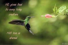 5 Fascinating Facts About Migratory Birds - Farmers' Almanac Hummingbird Nectar, Hummingbird Flowers, Hummingbird Garden, Plants To Attract Hummingbirds, Migratory Birds, Farmers Almanac, Garden Animals, Humming Bird Feeders, Humming Birds