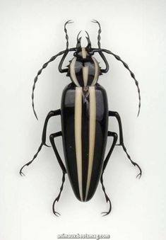 Like the idea of a deco piece - stylised Beetle With Black And White Stripes Beetle Insect, Beetle Bug, Insect Art, Cool Insects, Bugs And Insects, Cool Bugs, A Bug's Life, Beautiful Bugs, Tier Fotos