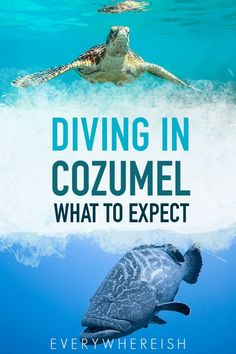 If you're planning a Mexico vacation, forget diving in Cancun-- head straight to the Cozumel reefs. Diving in Cozumel is world-class, and it's easily the thing to do on the island. Click through for info on where to go and what to expect! Mexico Vacation, Mexico Travel, Maui Vacation, Cozumel Mexico Cruise, Tulum, Cozumel Scuba Diving, Snorkeling, Visit Mexico, México City