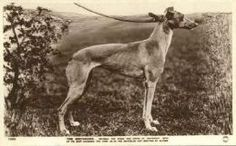 """Postcards - """"The Greyhound, notable for speed and grace of movement, seen at its best coursing the hare, as in the Waterloo Cup meeting at Altcar"""""""