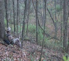 Fall Turkey Hunting Strategies: turkey hunters face different challenges in autumn