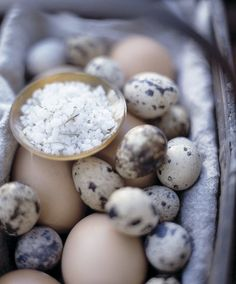 I  like this picture of these speckled eggs and sea salt for no apparent reason. Now I want a chicken.....