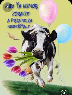 Good Morning, Humor, Birthday, Poster, Blog, Pictures, Animals, Goals, Album