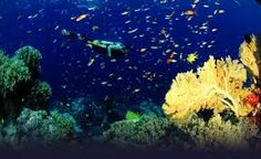 ผลการค้นหารูปภาพสำหรับ diving phuket
