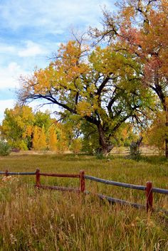 Fall Colors in Fort Collins Colorado