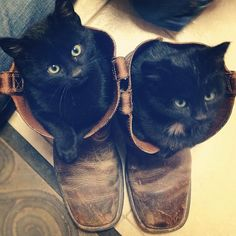 {the farmer's wife}: {life lately} seriously? 2 cute, black kittens in boots. DYING!